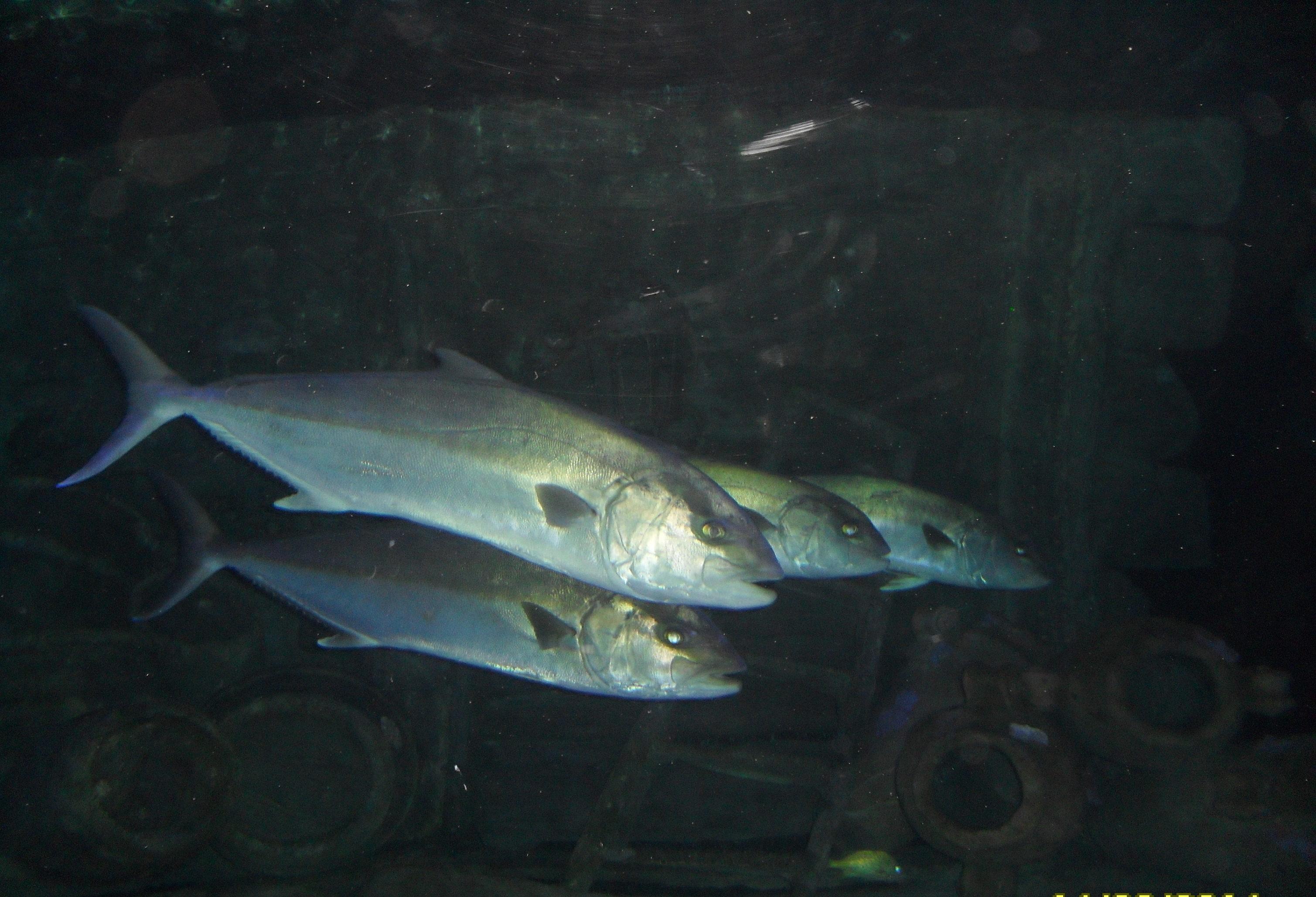 Океанариум в Турции, рыбы