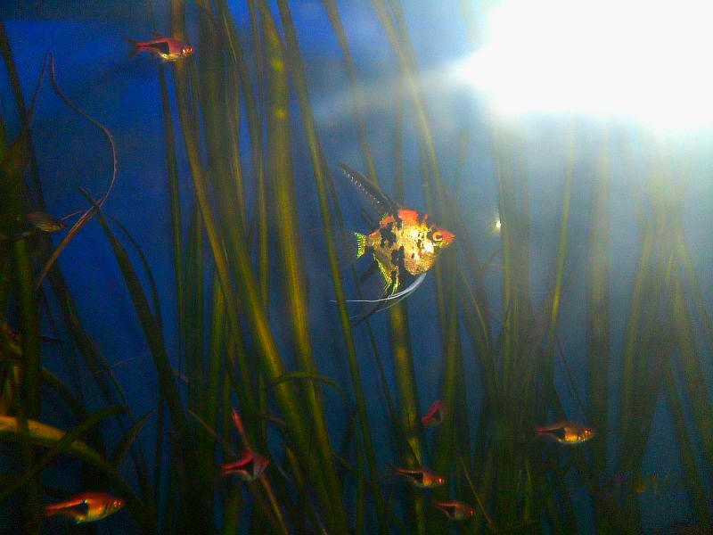 маленькая красивая рыбка