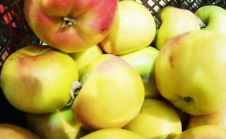 Диета раздельное питание советует есть фрукты отдельно от белков