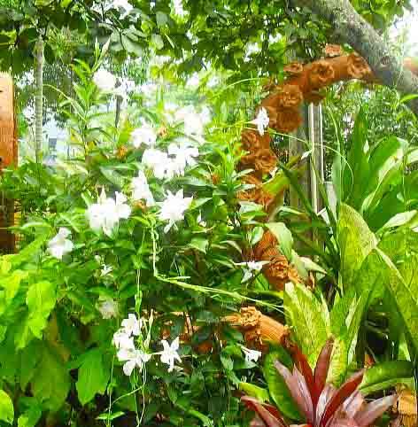 Тропический парк Нонг Нуч цветы