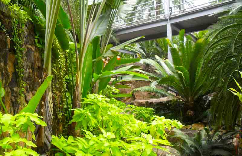 Тропический парк Нонг Нуч мостик