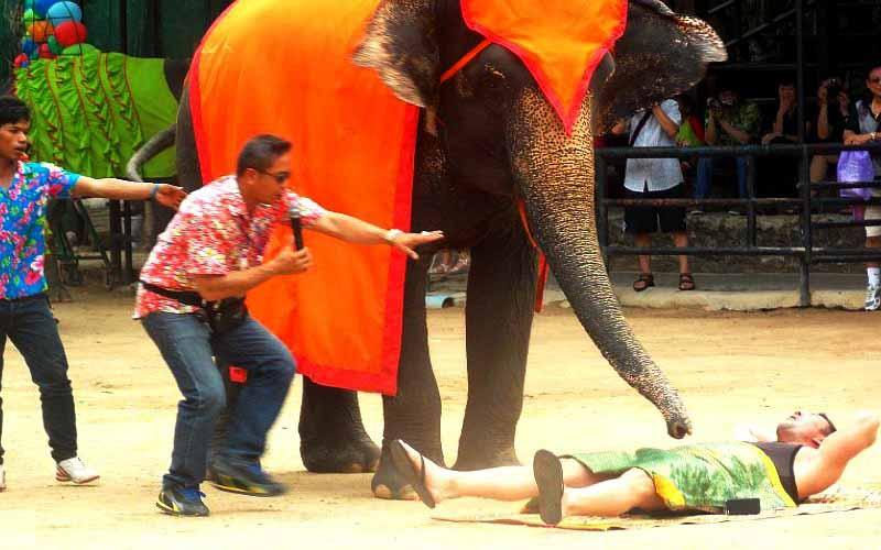 слон делает массаж человеку на шоу слонов