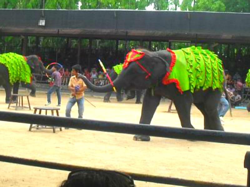 шоу слонов, слон с обручем