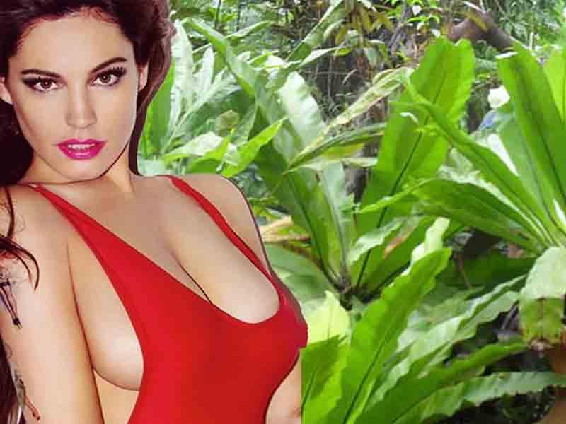Натуральная красивая грудь у Келли Брук