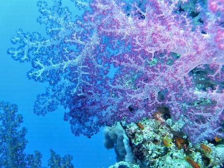 подводный мир кораллов
