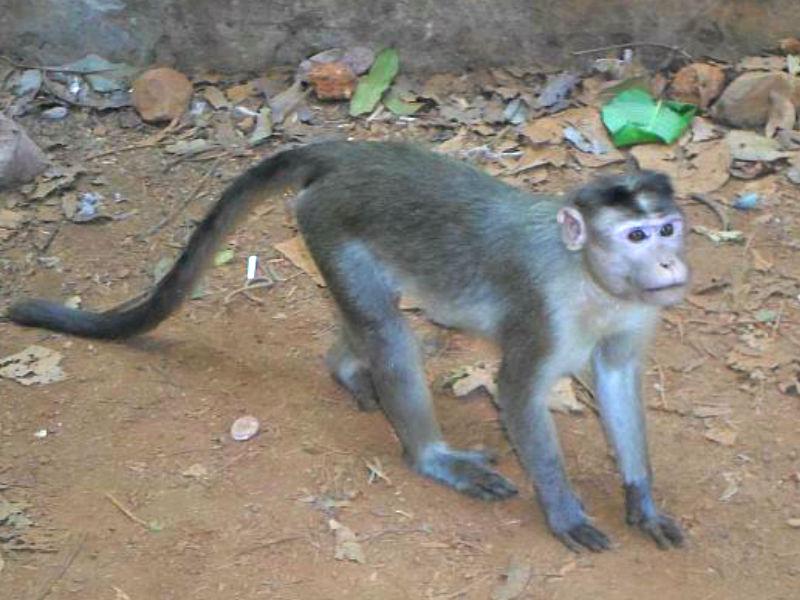 обезьяна в сафари парке
