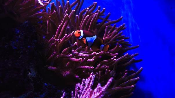подводный мир рыбы клоуна