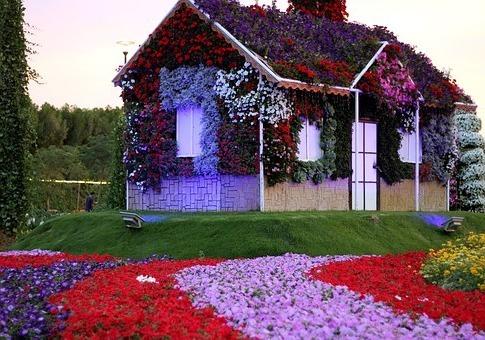 на отдыхе в Дубае мы посетили сад цветов