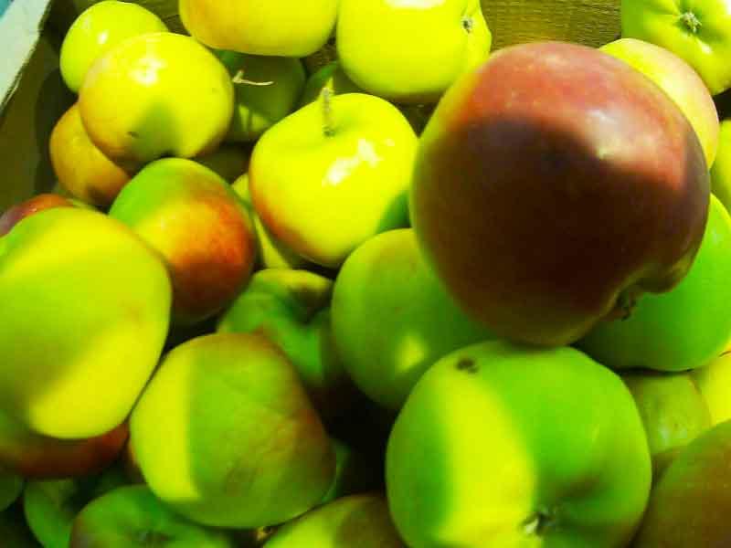 как для здоровья похудеть без вреда помогут в этом яблоки