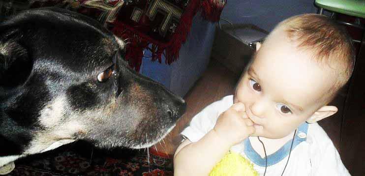 Безопасность детей с животными