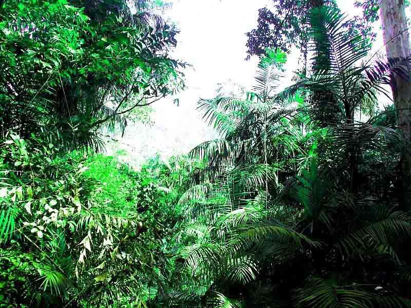 Экскурсии Индии по джунглям