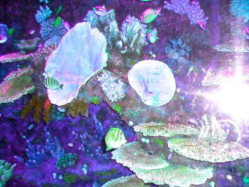 обитатели океанариума в Турции