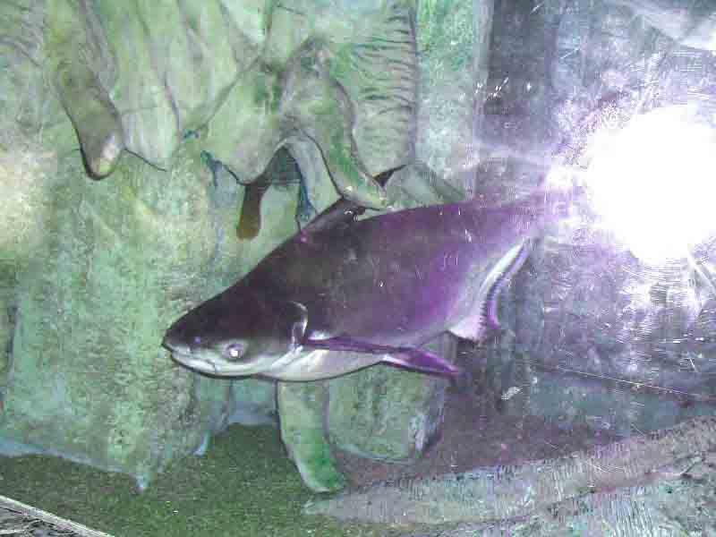 Рыба в океанариуме Анталии